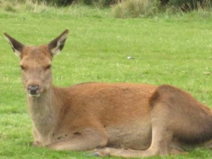 wildlife end of oct 2014 031